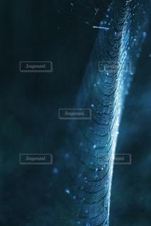 光と蜘蛛の巣の写真・画像素材[1440097]