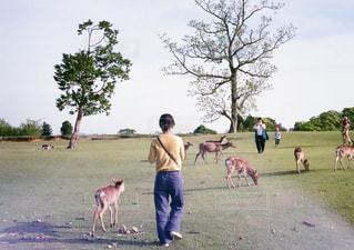 鹿と女の子の写真・画像素材[1594088]