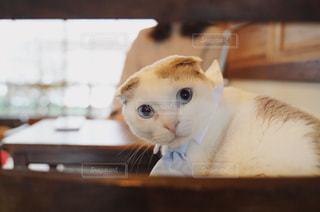 振り向く猫の写真・画像素材[1816535]
