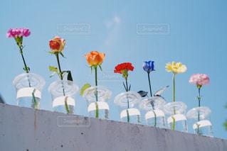 カラフルな一輪の花たちと空の写真・画像素材[2119359]
