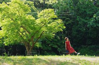 森の中の赤ワンピースの女の子の写真・画像素材[2249963]