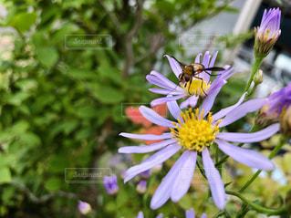 花と蜂の写真・画像素材[1457805]
