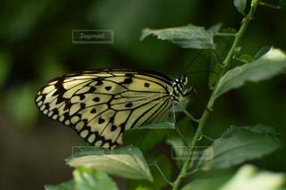 近くの植物のアップの写真・画像素材[1658917]
