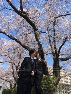 桜の写真・画像素材[1442640]