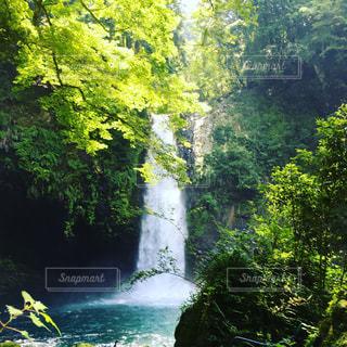 森の中の大きな滝の写真・画像素材[1442540]