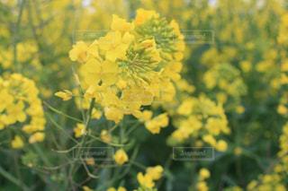 緑の葉と黄色の花の写真・画像素材[1443173]