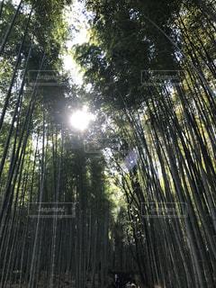 竹林の道の写真・画像素材[1443451]