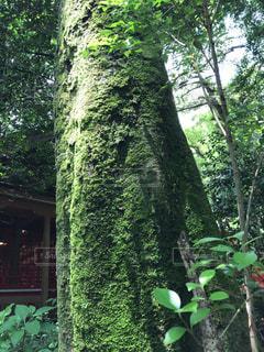 パワーを感じる樹木の写真・画像素材[1444441]