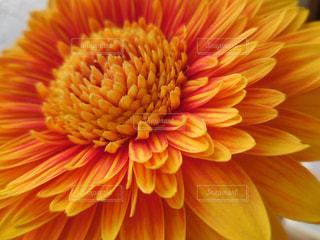 花のアップの写真・画像素材[1444690]