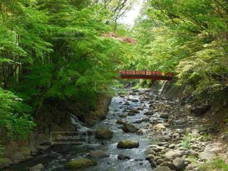 伊豆修善寺温泉の桂橋。別名、結ばれ橋。の写真・画像素材[1446342]