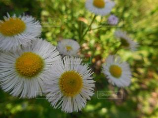 花のアップの写真・画像素材[1452767]