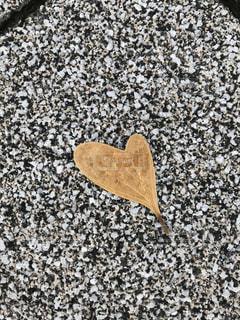 ハートの落ち葉の写真・画像素材[1484333]