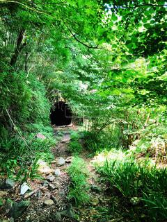 廃トンネルの写真・画像素材[1444318]