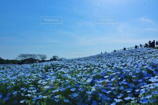 一面の青の写真・画像素材[1444468]
