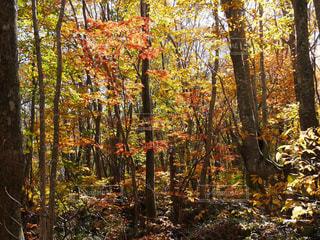 森の中の木の写真・画像素材[1444938]