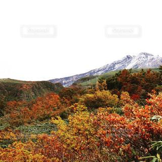 初雪と紅葉の写真・画像素材[1445696]