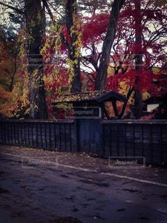 武家屋敷の紅葉の写真・画像素材[1446372]