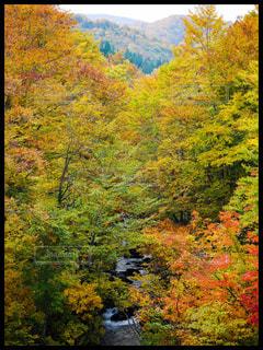 山の紅葉の写真・画像素材[1450294]