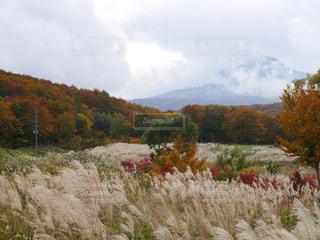 高原の紅葉の写真・画像素材[1450559]