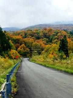紅葉の中をドライブの写真・画像素材[1450623]