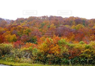 山の紅葉の写真・画像素材[1450662]