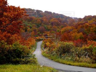 山の紅葉の写真・画像素材[1452630]