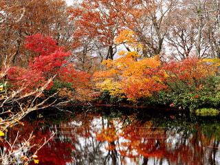 善神沼の紅葉の写真・画像素材[1460863]