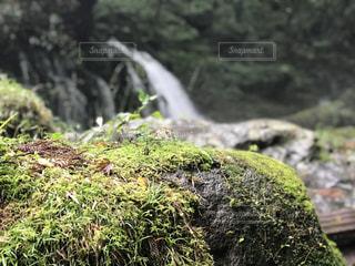 岩に付いた苔の写真・画像素材[1504254]
