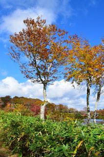湖畔の紅葉した樹木の写真・画像素材[1528933]