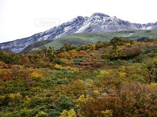 紅葉と初雪の写真・画像素材[1550235]