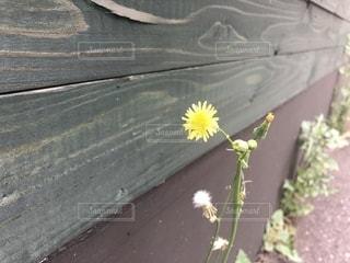 草花のアップの写真・画像素材[1446324]