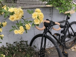 花の脇に駐車自転車の写真・画像素材[1455496]