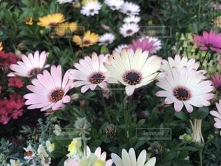植物の写真・画像素材[1455940]