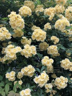 植物の写真・画像素材[1455969]