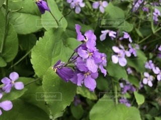 植物の写真・画像素材[1455970]