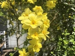 植物の写真・画像素材[1455974]