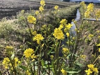 植物の写真・画像素材[1455977]