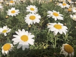 植物の写真・画像素材[1456009]