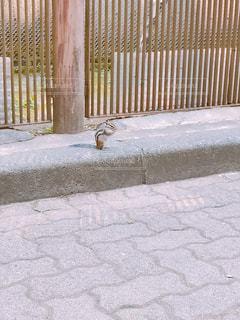 リス餌食べてるの写真・画像素材[1445118]