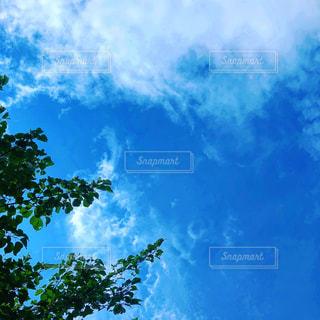 空には雲のグループの写真・画像素材[1445215]