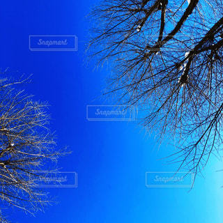 背景の青い空と木の写真・画像素材[1446421]