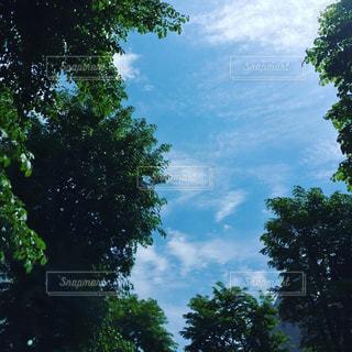 近くの木のアップの写真・画像素材[1447731]