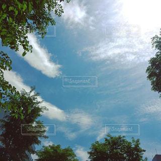 空と木の写真・画像素材[1447733]