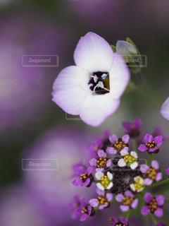 近くの花のアップの写真・画像素材[1445671]