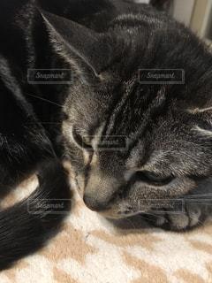 近くに猫のアップの写真・画像素材[1453192]