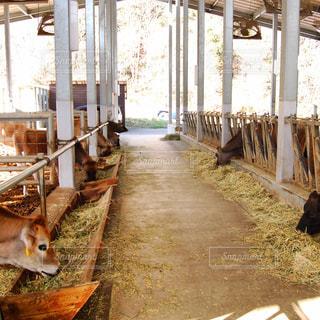 牛舎の風景の写真・画像素材[1464580]