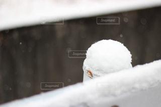 ポールに積もる雪の写真・画像素材[1824940]