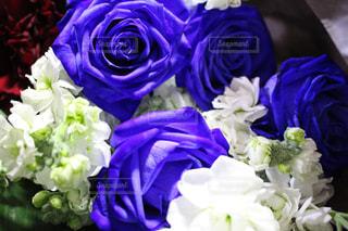 青い薔薇の写真・画像素材[1479390]