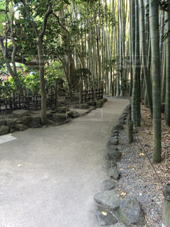竹林の写真・画像素材[1447602]