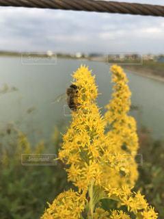 花と蜂の写真・画像素材[1545065]